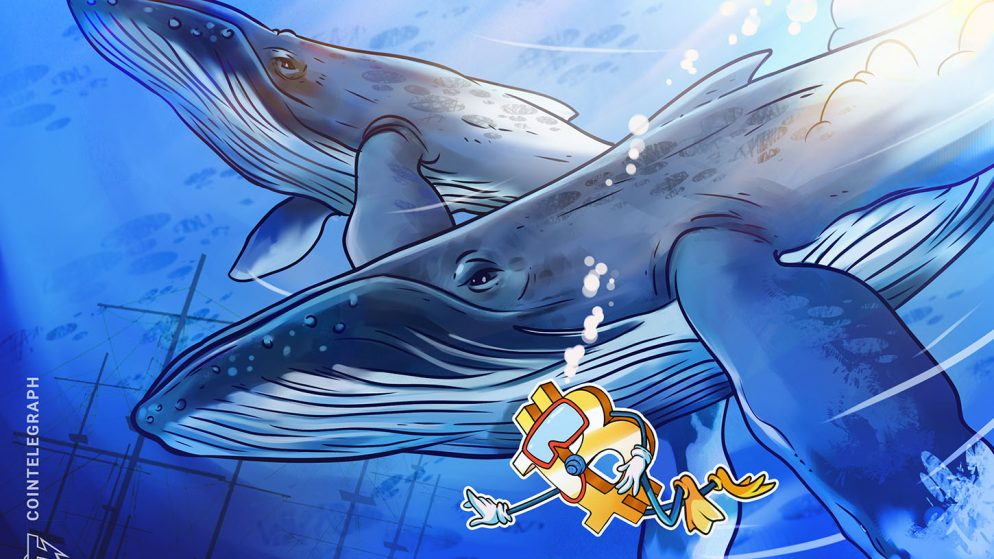 Bitcoin whales tread water and hodl regardless of current BTC value drop